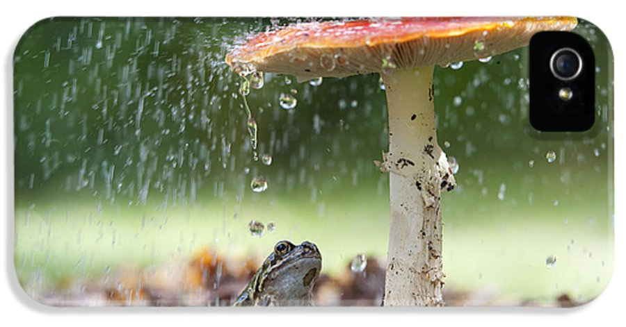 Frog IPhone 5 Case featuring the photograph One Rainy Day by Tim Gainey
