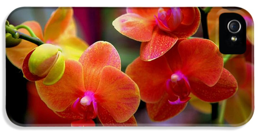 Orchids IPhone 5 Case featuring the photograph Orchid Melody by Karen Wiles