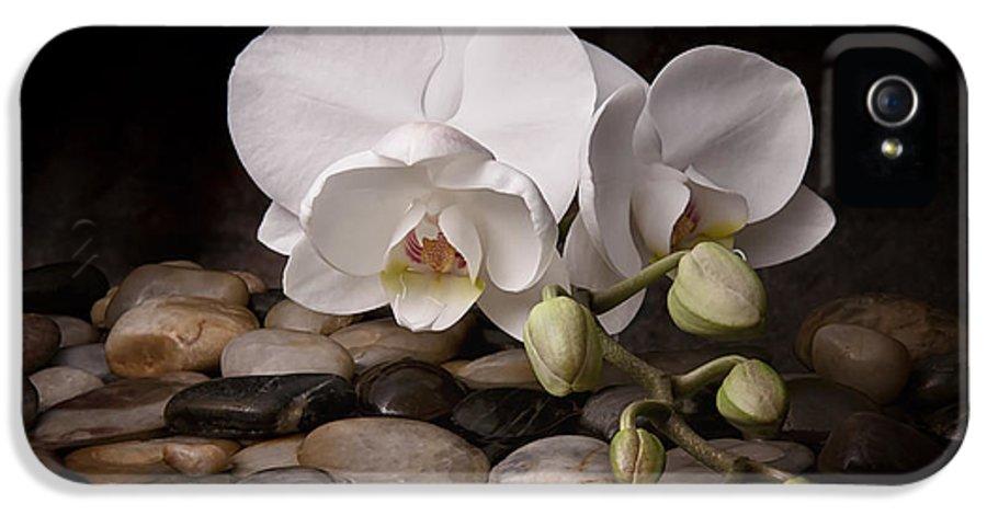 Arrangement IPhone 5 Case featuring the photograph Orchid - Sensuous Virtue by Tom Mc Nemar