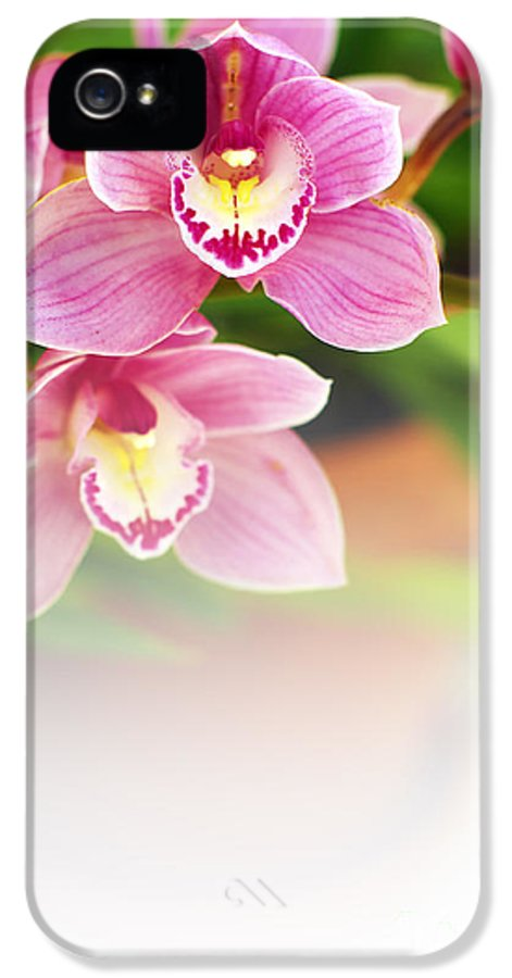 Abstract IPhone 5 Case featuring the photograph Orchids by Carlos Caetano