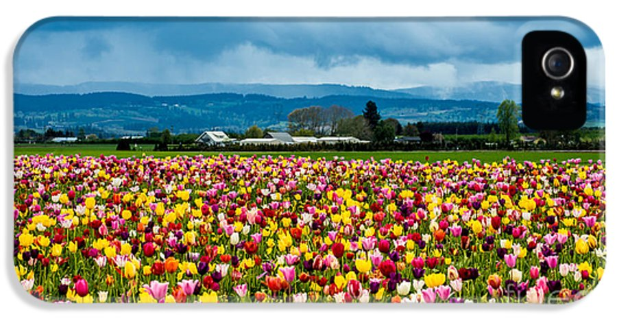 Oregon IPhone 5 Case featuring the photograph Oregon Tulip Farm - Willamette Valley by Gary Whitton