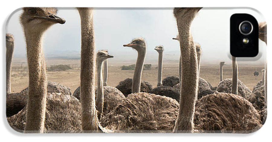 Animal IPhone 5 Case featuring the photograph Ostrich Heads by Johan Swanepoel