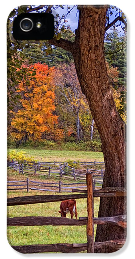 Autumn IPhone 5 Case featuring the photograph Out To Pasture by Joann Vitali