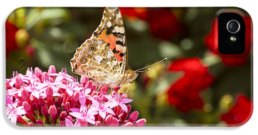Painted Lady IPhone 5 Case featuring the photograph Painted Lady Butterfly by Eyal Bartov
