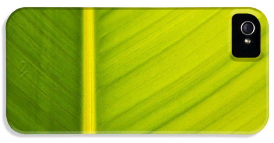 3scape Photos IPhone 5 Case featuring the photograph Palm Leaf Macro Abstract by Adam Romanowicz
