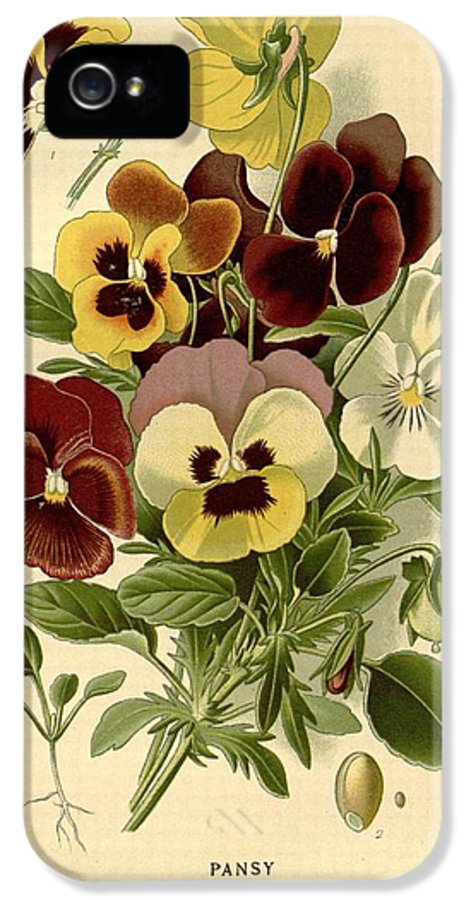 Pansy IPhone 5 Case featuring the painting Pansies by Philip Ralley