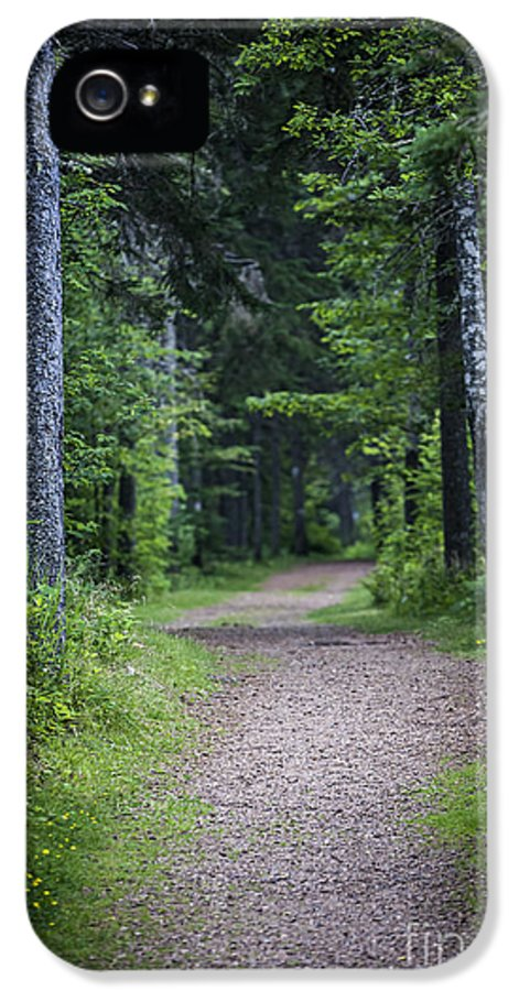 Path IPhone 5 Case featuring the photograph Path In Dark Forest by Elena Elisseeva