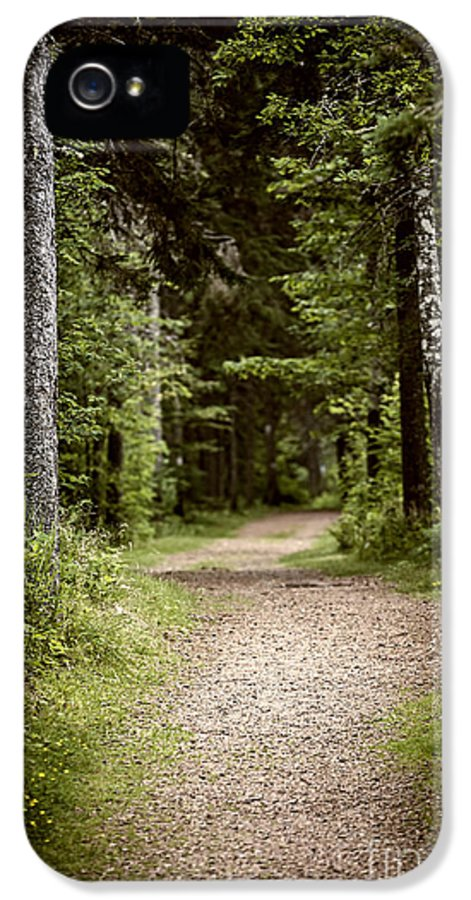 Path IPhone 5 Case featuring the photograph Path In Old Forest by Elena Elisseeva