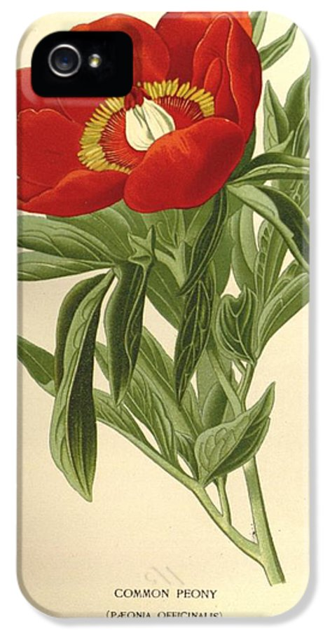 Peony IPhone 5 Case featuring the painting Peony by Philip Ralley