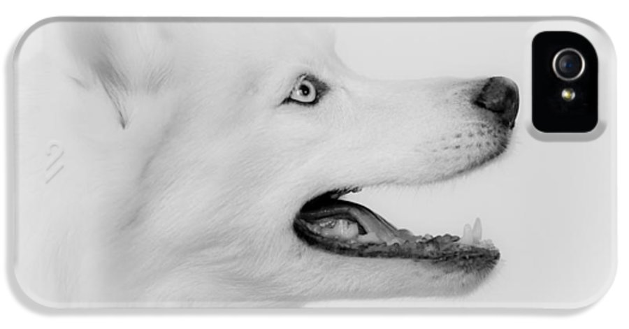 Siberian Husky IPhone 5 Case featuring the photograph Perfection by Betty Depee
