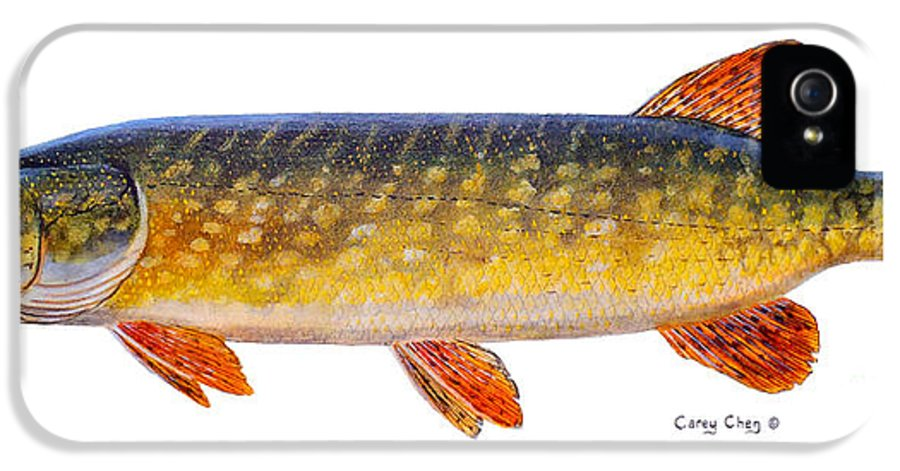 Pick IPhone 5 Case featuring the painting Pike by Carey Chen