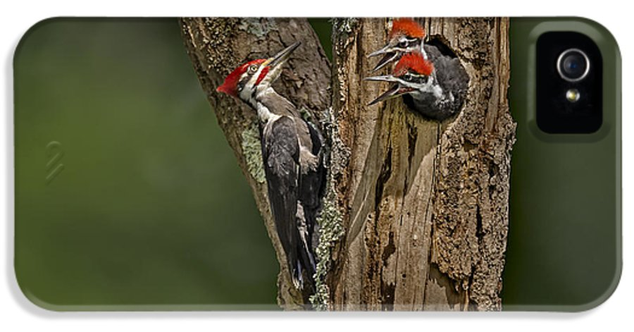 America IPhone 5 Case featuring the photograph Pilated Woodpecker Family by Susan Candelario