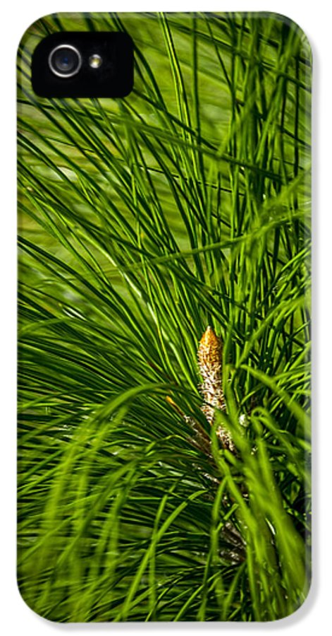 Pine Trees IPhone 5 Case featuring the photograph Pine Needles by Marvin Spates