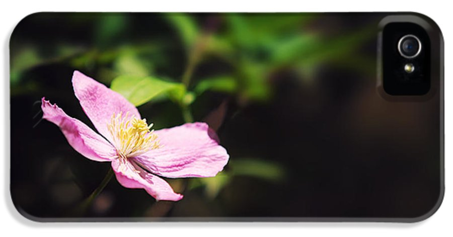 Clematis IPhone 5 Case featuring the photograph Pink Clematis In Sunlight by Jane Rix