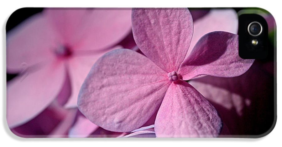 Hydrangeas IPhone 5 Case featuring the photograph Pink Hydrangea by Rona Black