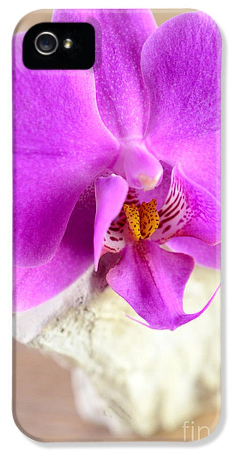 Decoration IPhone 5 Case featuring the photograph Pink Orchid On White Colored Driftwood by Sabine Jacobs