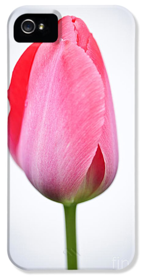 Tulip IPhone 5 Case featuring the photograph Pink Tulip by Elena Elisseeva