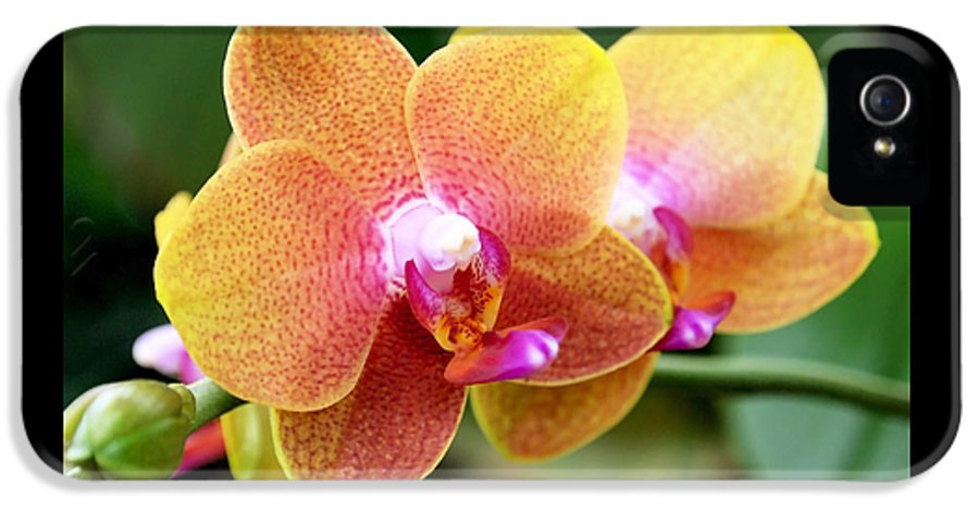 Orchid IPhone 5 Case featuring the photograph Pink Yellow Orchid by Rona Black
