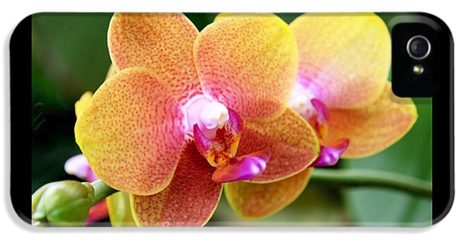 Orchid IPhone 5 / 5s Case featuring the photograph Pink Yellow Orchid by Rona Black