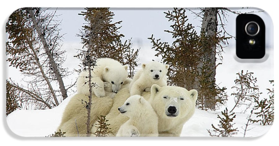 00601007 IPhone 5 Case featuring the photograph Polar Bear Ursus Maritimus Mother And Cubs by Matthias Breiter