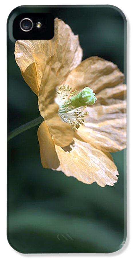 Poppy Orange IPhone 5 Case featuring the photograph Poppy by Tony Cordoza