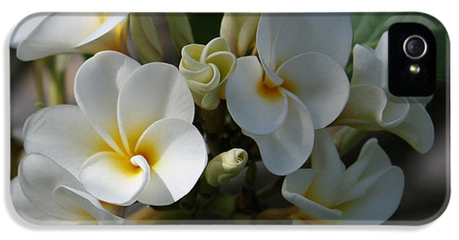 Aloha IPhone 5 Case featuring the photograph Pua Melia Na Puakea Onaona Tropical Plumeria by Sharon Mau