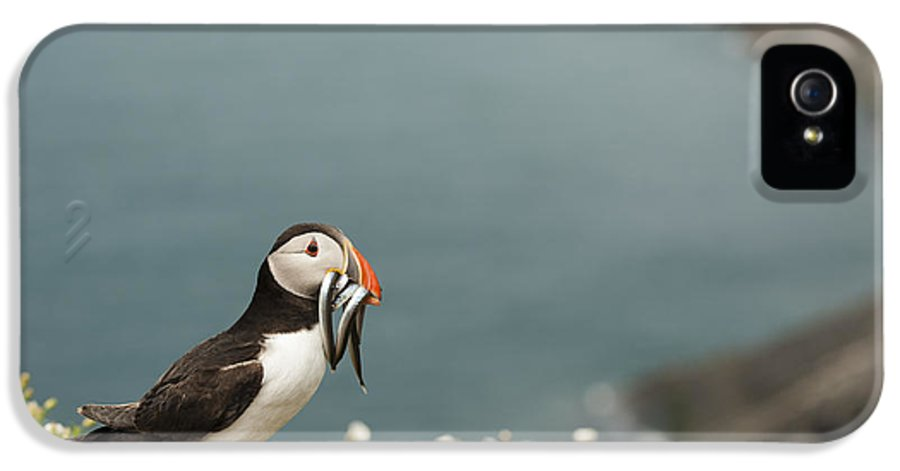 Arctica IPhone 5 Case featuring the photograph Puffin With Sandeels by Anne Gilbert