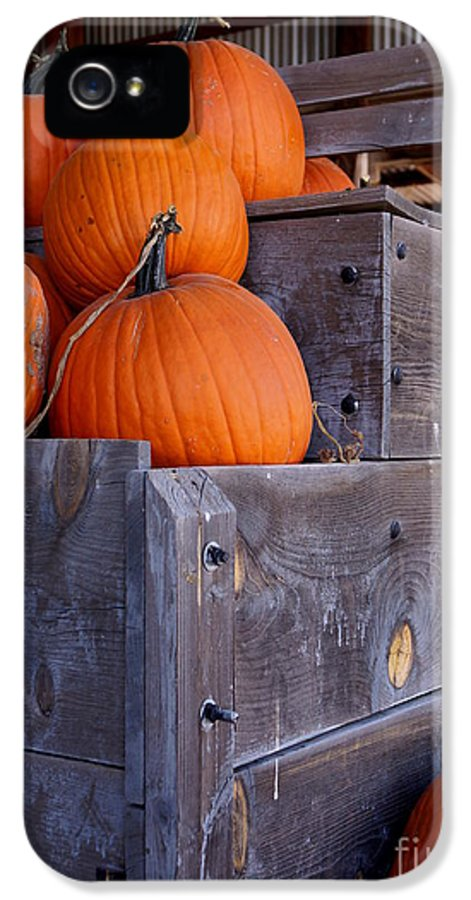 Farm IPhone 5 Case featuring the photograph Pumpkins On The Wagon by Kerri Mortenson