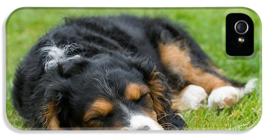 Pup IPhone 5 Case featuring the photograph Puppy Asleep With Garden Daisy by Natalie Kinnear