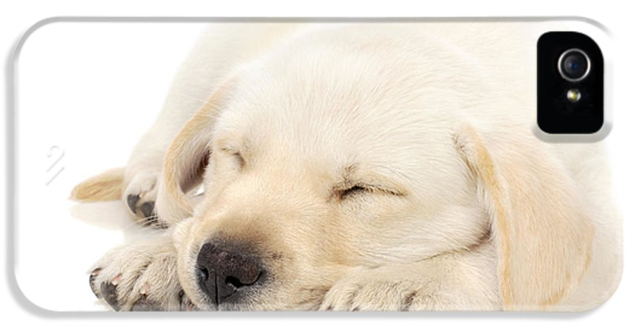 Adorable IPhone 5 Case featuring the photograph Puppy Sleeping On Paws by Johan Swanepoel