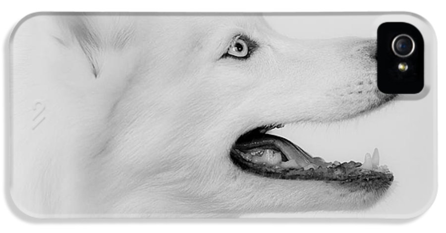 Siberian Husky IPhone 5 Case featuring the photograph Pure by Betty Depee