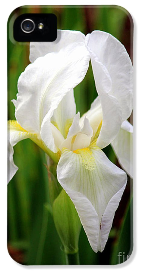 Purely White Ris IPhone 5 Case featuring the photograph Purely White Iris by Kathy White