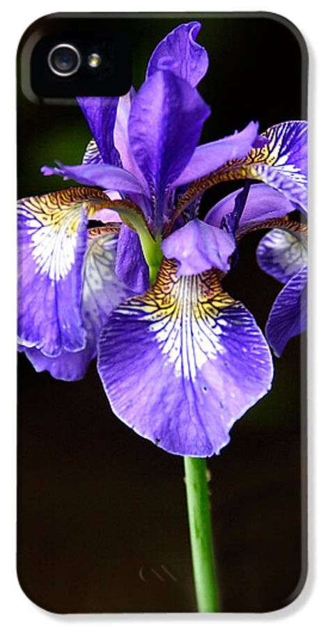 3scape Photos IPhone 5 Case featuring the photograph Purple Iris by Adam Romanowicz