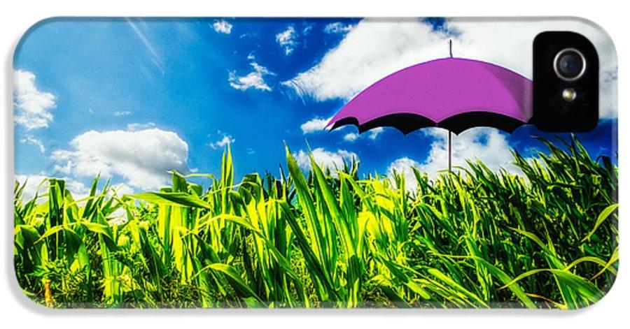 Umbrella IPhone 5 Case featuring the photograph Purple Umbrella In A Field Of Corn by Bob Orsillo