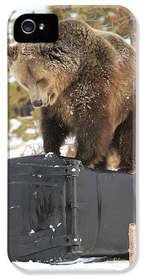 Grizzly Bear IPhone 5 Case featuring the photograph Puzzler by Adam Jewell