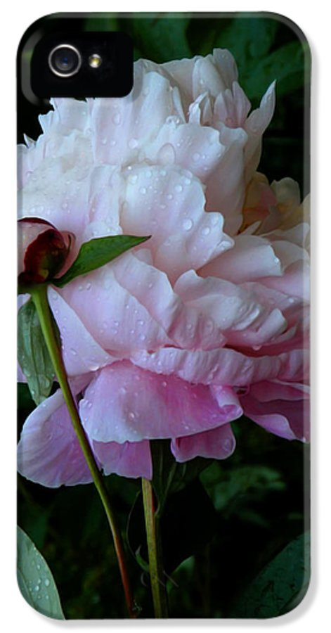 Peony IPhone 5 Case featuring the photograph Rain-soaked Peonies by Rona Black