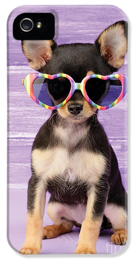 Sunglasses IPhone 5 Case featuring the digital art Rainbow Sunglasses by Greg Cuddiford
