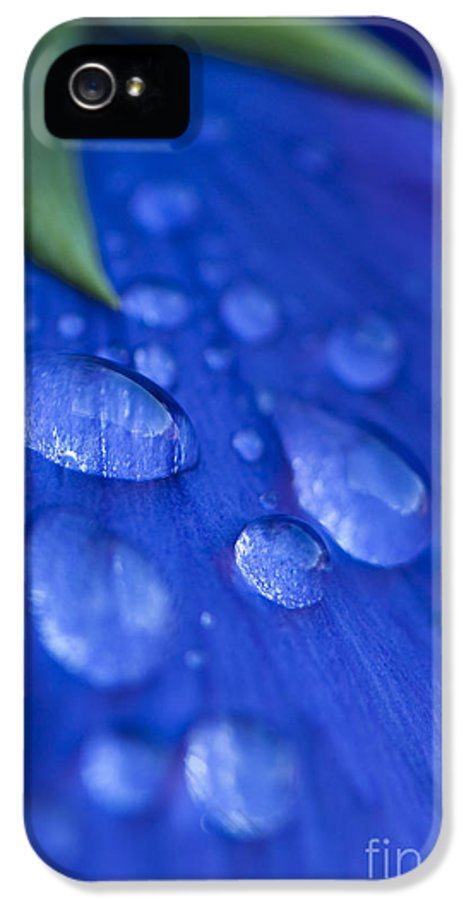 Abstract IPhone 5 Case featuring the photograph Raindrop Pansy by Anne Gilbert