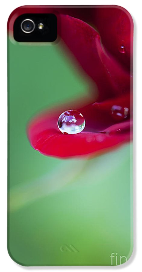Raindrops IPhone 5 Case featuring the photograph Raindrops And Roses by Tim Gainey