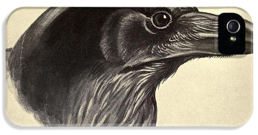 Raven IPhone 5 Case featuring the painting Raven by Philip Ralley