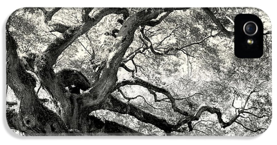 Abstract Trees IPhone 5 Case featuring the photograph Reaching For Heaven by Karen Wiles