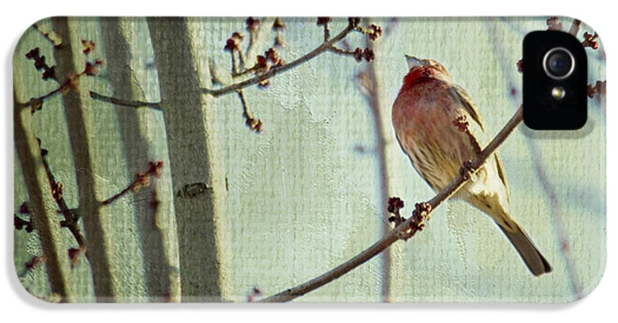 Bird IPhone 5 Case featuring the photograph Ready For The Day by Rebecca Cozart
