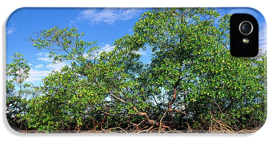 Acanthaceae IPhone 5 Case featuring the photograph Red Mangrove East Coast Brazil by Pete Oxford