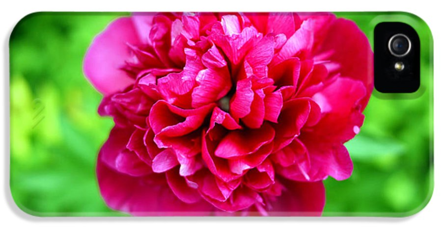 Flower IPhone 5 Case featuring the photograph Red Peony Flower by Edward Fielding