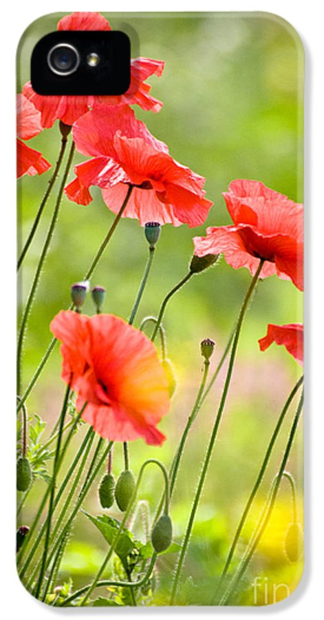 Poppy IPhone 5 Case featuring the pyrography Red Poppies by FunCards