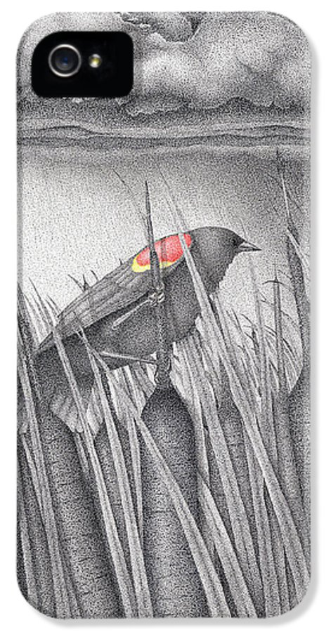 Red-winged Blackbird IPhone 5 Case featuring the drawing Red-winged Blackbird by Wayne Hardee