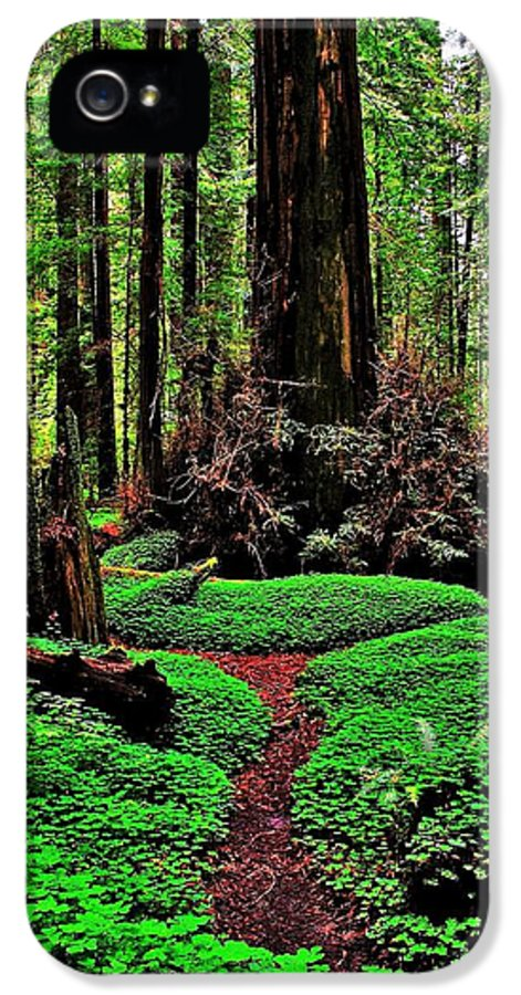 Redwood IPhone 5 Case featuring the photograph Redwoods Wonderland by Benjamin Yeager