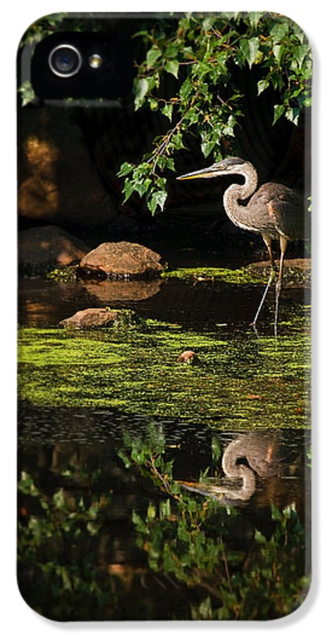 Ardea Herodias IPhone 5 Case featuring the photograph Reflective Heron by Sylvia J Zarco
