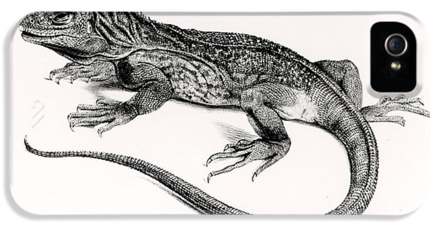 Lizard IPhone 5 Case featuring the painting Reptile by English School