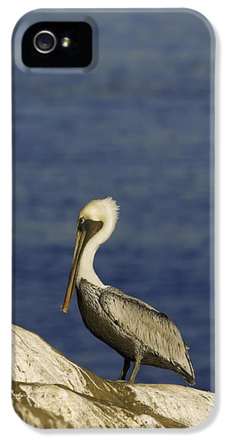 Dusk IPhone 5 Case featuring the photograph Resting Pelican by Sebastian Musial
